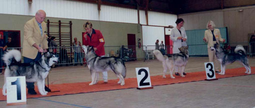 AMCF - Nationale d' Elevage 2001