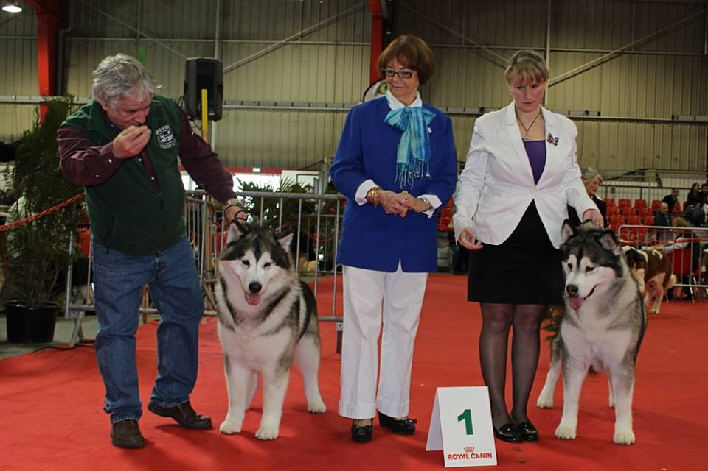 SPECIALE PERIGUEUX (CACIB) 8 MARS 2014 - JUGE : Mme Jeannette LARIVE